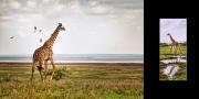 Serengeti [Álbum] (2014) - Colección General