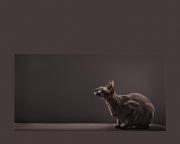 Gris y Balding (2010) - Colección de préstamos