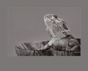 Iguana Be In Pictures (2011) - Colección General
